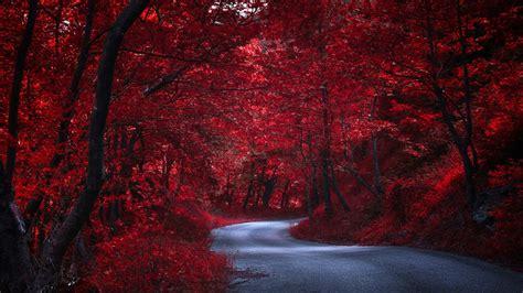 road   red forest hd wallpaper wallpaper studio