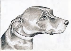 pin easy charcoal animal drawings  pinterest art