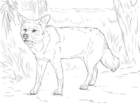 dingo coloring page  printable coloring pages