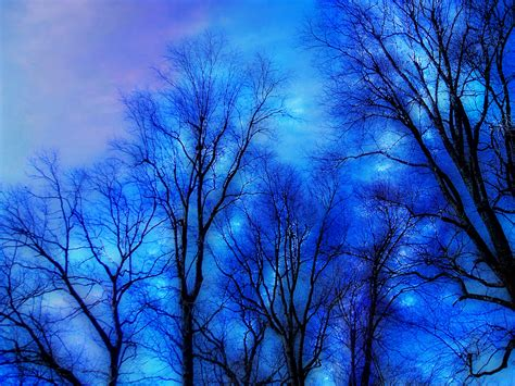 zima blue trees flickr photo sharing