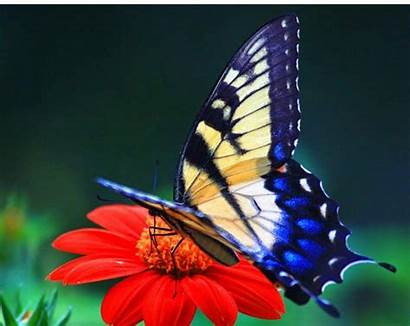 Butterfly Wallpapers Colorful Butterflies Desktop Backgrounds Cool
