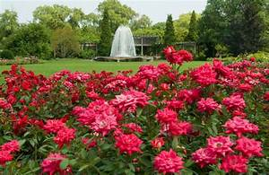 Red Rose Garden in The World picture | Holy Images