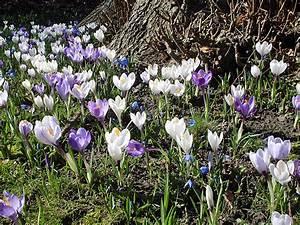 Blumen Im Frühling : fruehling blumen hintergrundbilder wallpaper kostenlos ~ Orissabook.com Haus und Dekorationen