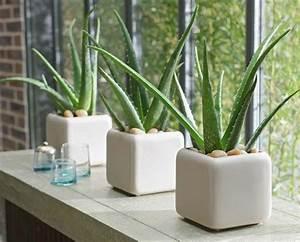 Plante D Intérieur Pas Cher : 5 plantes d int rieur pour d corer la chambre coucher et ~ Dailycaller-alerts.com Idées de Décoration