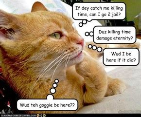 funny cat quotes quotespicturescom