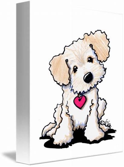 Doodle Dog Puppy Niles Kim Puppies Labradoodle
