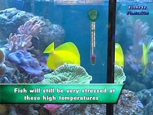 Optimale Aquarium Temperatur : the actual correct temperature for a reef aquarium youtube ~ Yasmunasinghe.com Haus und Dekorationen