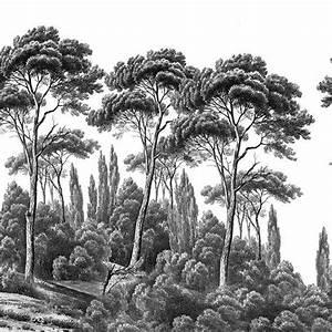 Papier Peint Ananbo : pins et cypr s noir et blanc papier peint panoramique ananb ~ Melissatoandfro.com Idées de Décoration