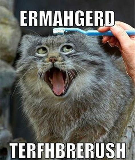 Ermahgerd Animal Memes - funny ermahgerd animal pictures