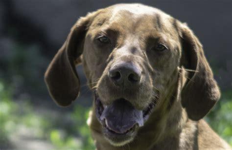 comune di torino ufficio anagrafe adotta un tutela animali