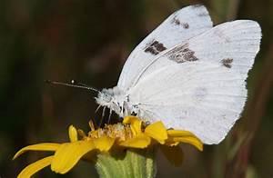 Business Project Plan Alpine Butterflies Yosemite National Park U S National