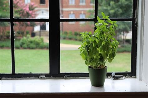 Plant Window by 5 Vital Tips To Improve Air Circulation For Houseplants