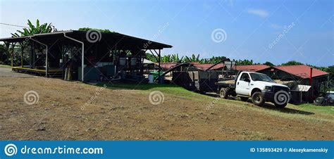 Our plantation on molokai is called coffees of hawaii estate and farm. Coffee Plantation In Hawaii Editorial Stock Image - Image of fruit, caffeine: 135893429