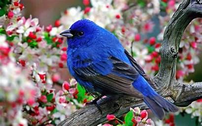 Birds Nature Animals Desktop Wallpapers Animal Background