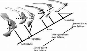 Continuum of shoulder force-balance mechanisms in ...