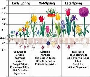 Blumenzwiebeln Pflanzen Frühjahr : blumenzwiebeln pflanzen im fr hjahr f r den sommer gartenm bel gartenm bel garten pflanzen ~ A.2002-acura-tl-radio.info Haus und Dekorationen