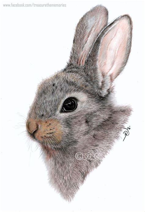 rabbit pencil drawing  getdrawings