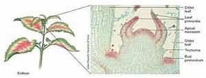 Plant Tissues