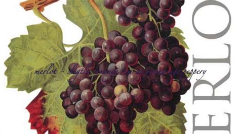 Types Of Grapes Cocolinh Youtube