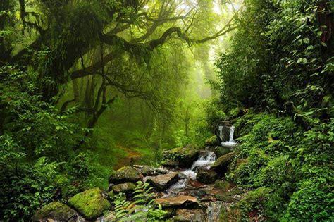 Daintree Rainforest Diwan Australia it is the #largest