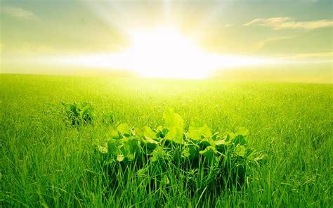 Green Wallpaper Hd Morning Green Grass Rising Sun