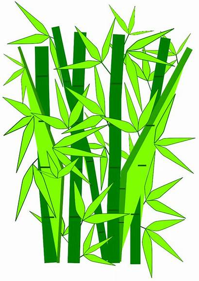 Bamboo Vector Clip Clipart Pohon Tree Gambar