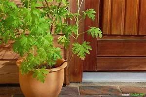 Hausmittel Gegen Mücken Im Zimmer : insekten in blumenerde winzige l ngliche insekten in blumenerde fliegen in blumenerde bek ~ Orissabook.com Haus und Dekorationen