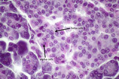 specialized eukaryotic cells bioc