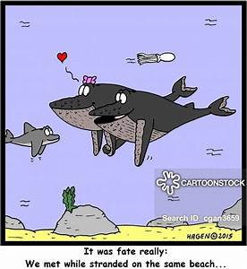 Humpback Whale Cartoons and Comics - funny pictures from ...