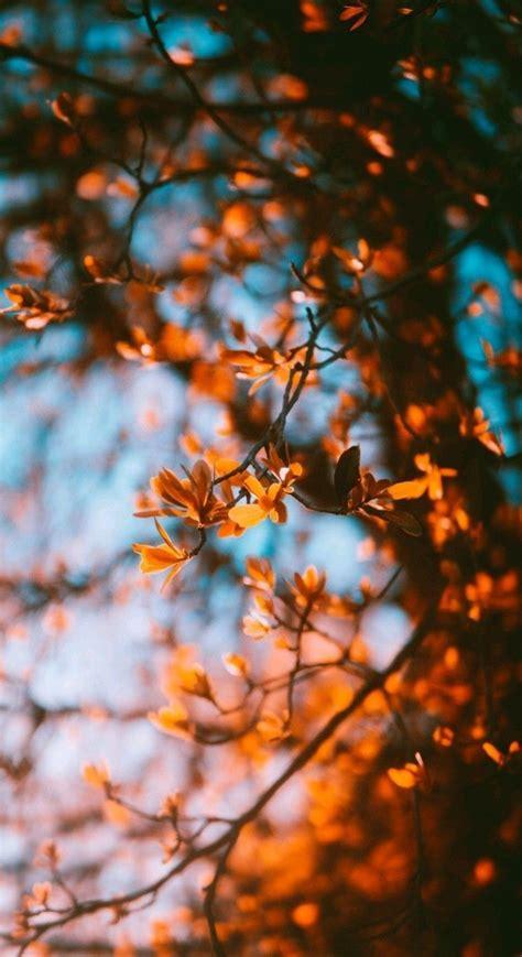 720 x 1280 px post dates : 55+ Hello Autumn Aesthetic HD Wallpapers (Desktop ...