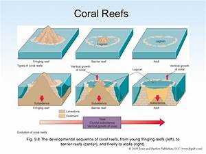 Types Of Coral Reefs  U2013 Saving Coral Reefs