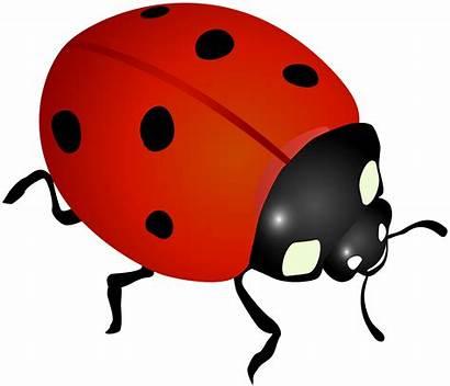 Ladybug Clipart Clip Transparent Yopriceville Spring Cliparts