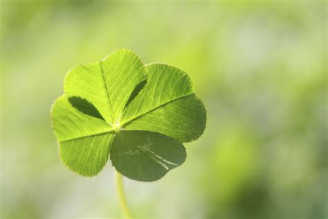 four leaf clover finding great customer service is more than just luck central insurance companies