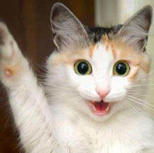 The gallery for --> Excited Cat Images