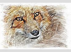 Kostenloses Foto Fuchs, Zeichnung, Bunt Kostenloses
