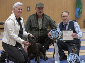 Southern Counties SBT Society - Championship Show 2019