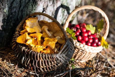 Top 5 vērtīgākie rudens produkti, kas ar steigu jāliek ...