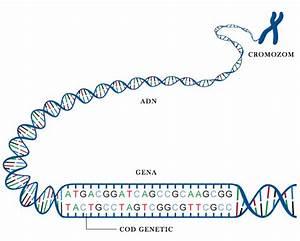 ce sunt proteinele