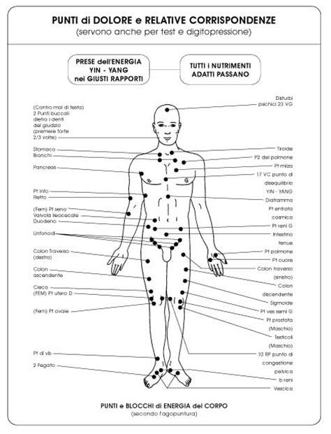 Organi Interni Lato Sinistro by Morfologia Corpo