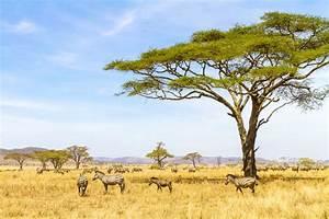 Top 10 Safaris in Africa