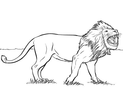 coloring pages lions coloring home