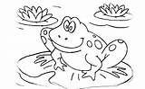 Frog Coloring Pages Cycle Tadpole Frogs Leap Drawing Colouring Toad Printable Cake Print Quality Getdrawings Getcolorings Sheet Sheets Housewarming Need sketch template