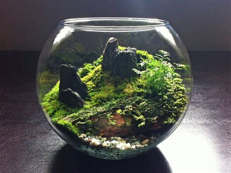 where to buy moss for terrariums a world within viva voce