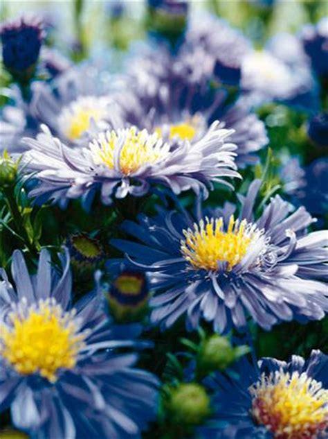 blaue blumen frühling f 252 r balkon und garten blaue blumen und pflanzen brigitte de