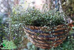 Una ricadente in miniatura per un balcone verde anche d'inverno Fiori e Foglie
