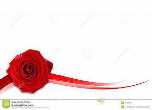 Red Rose With White Background - WallpaperSafari