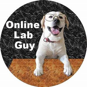 Online Lab Guy Teaching The Skills You Need To Earn Online