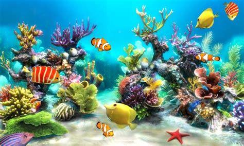 hd fish  wallpaper  fun apk