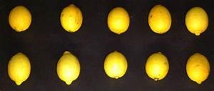 Wie Lagert Man Zitronen : zitronenbatterie ~ Buech-reservation.com Haus und Dekorationen