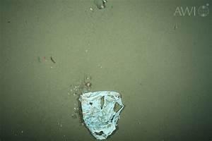 Plastic Litter On Arctic Ocean Floor Doubled In 10 Years